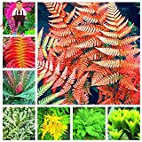 Portal Cool 100 Stücke Garten Farn Samen Seltene Creeper Reben Grassamen Mix Regenbogen Laub Pflanze
