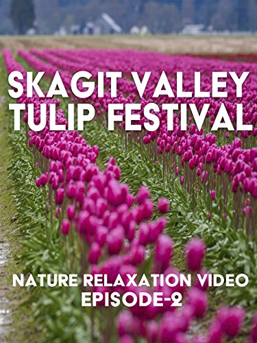 nature-relaxation-video-skagit-valley-tulip-festival-episode-2