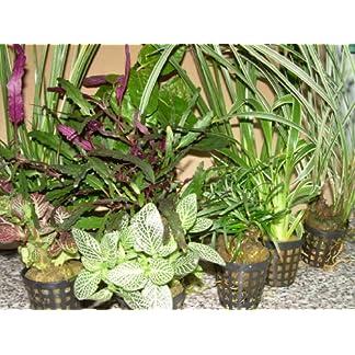 5 pots with plants for paludarium, terrarium, mix 61ZJ9vllxRL