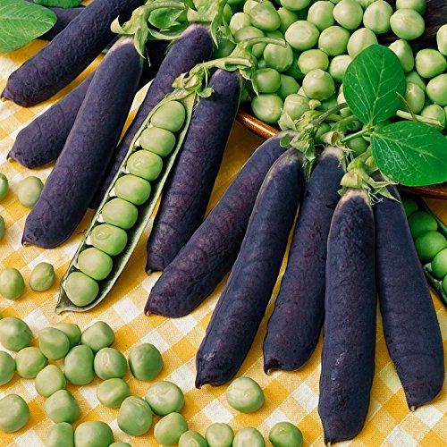 Erbse Samen (Erbse - Pea Purple Podded - lila-fruchtig - blau - 30 Samen)