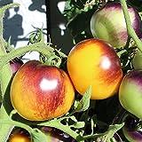 10 Samen Pansy Ap Tomate – dunkle Tomate mit gelber Grundfarbe