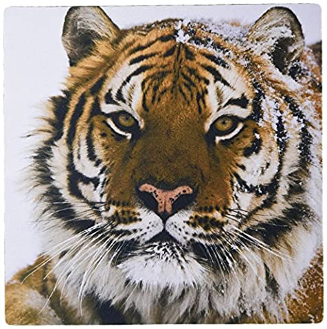 3dRose LLC 8 x 8 x 0.25 Inches Relaxed Siberian Tiger Portrait Mouse Pad (mp_11373_1)