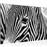 Bilder Afrika Zebra Wandbild 120 x 80 cm - 3 Teilig Vlies - Leinwand Bild XXL Format Wandbilder Wohnzimmer Wohnung Deko Kunstdrucke Schwarz Weiß -100% MADE IN GERMANY - Fertig zum Aufhängen 001431a