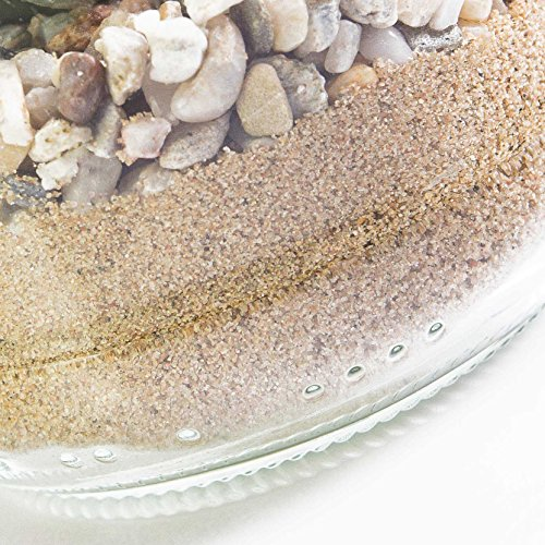 artplants Künstliche Agave Attenuata im Glas, grün, 16 cm, Ø 13 cm – Künstlicher Kaktus/Mini Kunstpflanze