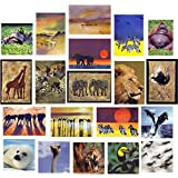 20 Wildlife Blank Greeting or Birthday Cards