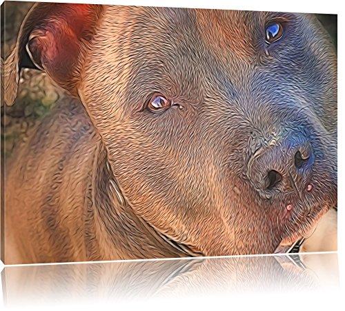 schöner Pit Bull Terrier Deluxe Format: 60x40 cm auf Leinwand, XXL riesige Bilder fertig gerahmt mit Keilrahmen, Kunstdruck auf Wandbild mit Rahmen, günstiger als Gemälde oder Ölbild, kein Poster oder Plakat