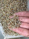 Bio Alfalfa Luzerne Keimsaat - Sprossensamen für die Zucht von Alfalfasprossen - der gesunde Energiespender - lecker in Salaten - Inhalt: 1 kg Alfalfa Samen