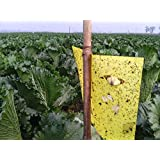 "High Effect 10 Packs 10""*8""(25cm*20cm) Double-Sided Fly Traps, Yellow Sticky Traps for White Flies, Aphids, Leaf Miner"