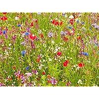 100g Ancient British Meadow Wild Flower Rare Grasses 70/30 Mix Mix 71 by Pretty Wild Seeds