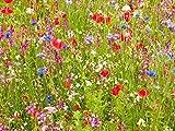 100g ANCIENT BRITISH MEADOW WILD FLOWER RARE GRASSES 70/30 mix MIX 71