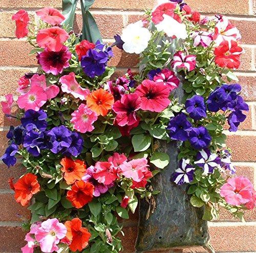 Fleurs et plantes Pouches-- 15 sachets