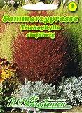 Sommerzypresse einjährig, , geeignet als niedrige einjährige Hecke, 'Kochia scoparia Trichophylla'