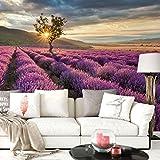 K&L Wall-Art Fototapete - Vliestapete - Tapete - Lavendelblüte in der Provence - Gesamtgröße: 384 cm Breite x 260 cm Höhe - FT-3160-260