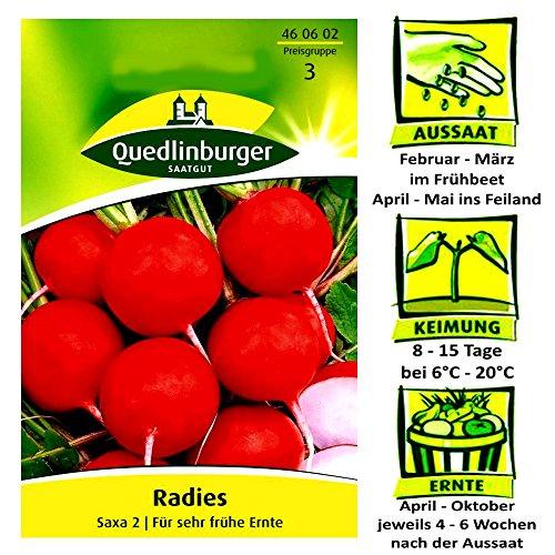 Quedlinburger Radieschen Radies Saxa 2 - Raphanus sativus / sehr frühe Ernte / Ernte April bis Oktober - 4 bis 6 Wochen nach Aussaat