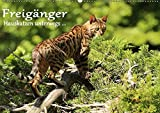 Freigänger - Hauskatzen unterwegs (Wandkalender 2019 DIN A2 quer): Hauskatzen in freier Natur (Monatskalender, 14 Seiten ) (CALVENDO Tiere)