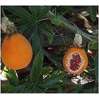 PREMIER SEEDS DIRECT - Passion Fruit Edible (Passiflora EDULIS) - 45 Seeds
