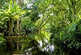 Scenolia Tapisserie Toile Textile Forêt et Rivière dans la Jungle Tropicale 3 x 2,70m - Décoration Murale Effet Trompe l'Oeil - Revêtement Panoramique Poster XXL - Pose Facile et Qualité HD