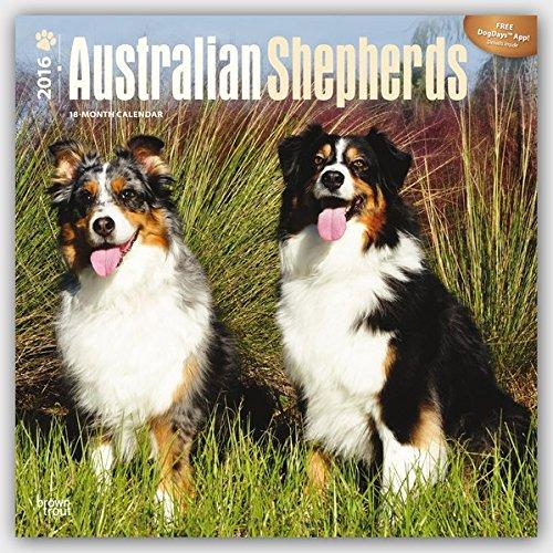 Australian Shepherds 2016 Square 12x12 Multilingual Edition