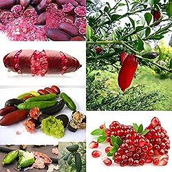 Kisshes 20Pcs Finger Frucht Mehrjährig Obst Samen Granatapfel Limonensamen seltene Pflanze Hausgarten Balkon Fruchtsamen Bonsai Obstbaum Saatgut