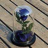 Zhuotop Rose Blume konserviert; Rose für die Ewigkeit, unsterbliche frische Rose, Glasbezug Einzigartiges Geschenk blau/rosa
