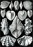 Posterlounge Holzbild 120 x 170 cm: Acephala von Ernst Haeckel