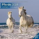 Pferde 2019, Wandkalender / Broschürenkalender im Hochformat (aufgeklappt 30x60 cm) - Geschenk-Kalender mit Monatskalendarium zum Eintragen