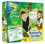 Insect Lore de Buki - Jeux Educatifs - Kit Insectes Vivants Chenilles - Version UK
