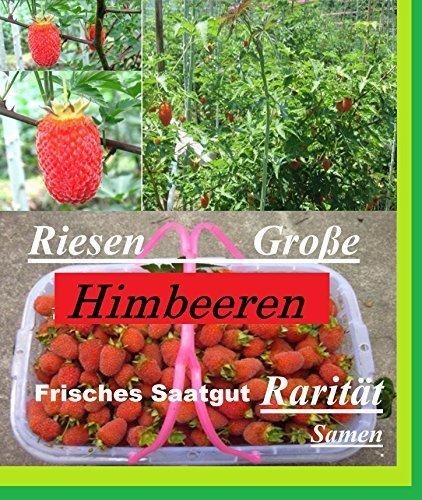 x 25 géant framboises graines semences Plant rarité Comestible Fruits RARE Comestible Nouveauté #131
