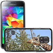 Grand Phone Cases Etui Housse Coque de Protection Cover Rigide pour // M00141815 Jirafa adulto animal de la fauna del // Samsung Galaxy S5 MINI SM-G800