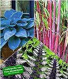 BALDUR-Garten Große Asia Kollektion
