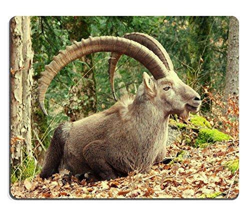 Capra Alpine Säugetier Goat Wild Horn Wildlife Rock QZONE Made, um Bestellung Reinigungstuch mit Neopren Gummi Maus Pads