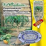 Flaschenbaum, Elefantenfuss (Portion inkl. Stecketikett)