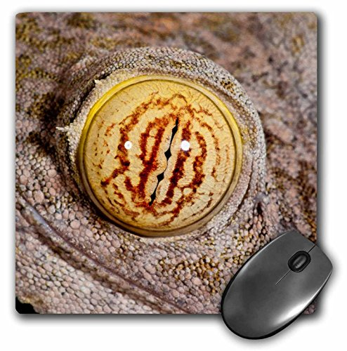 Danita Delimont - Lizards - Giant Leaf-tailed Gecko lizard, Madagascar - NA02 DNO0930 - David Northcott - MousePad (mp_140213_1) (Tailed Leaf Gecko Giant)