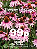 Thompson & ‿Morgan – Fleur – Echinacea Red Coneflower – 60 graines