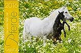 Die weite Welt der Pferde 2016