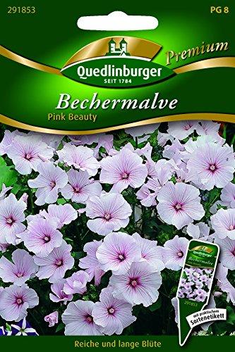 Malven Becher- Pink Beauty - Lavatera trimestris QLB Premium Saatgut Blumen einjährig -