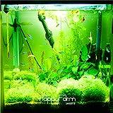 Nouvelle arrivée! Jardin des Plantes 10pcs un sac Limnophila de mousse graines de plantes aquatiques, les graines d'herbe aquarium Bonsai, # TU4PEL