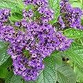 """Geschenk-Anzuchtset""""Fleur de Vanille"""" von Naturkraftwerk e. U. bei Du und dein Garten"""