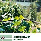MASTERBRICO Rete per ortaggi rampicanti Arrigoni Solania Rotolo 2x100 mt Verde Rete per rampicanti Coltivazione ortaggi Rete per Sostegno e Supporto Piselli pomodori