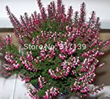 Heißer Verkauf 500pcs Aquarium Gras Blumensamen Wasser Wasserpflanzensamen (mix) Familie leicht Pflanzensamen