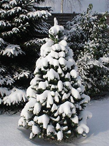 RS-Trade-HXT-Serie-knstlicher-Weihnachtsbume-120-270-cm-schwer-entflammbare-Tannenbume-mit-Schnellaufbau-Klappsystem-inkl-Christbaum-Stnder-aus-Metall