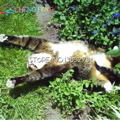 100 Pz Cat Mint Aromaticpotted Piante CATNIP Semi Heirloom fragrante menta Herb impianto per Seed Garden animale domestico Bonsai