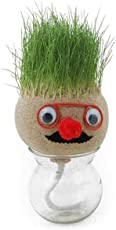 RAAYA Grass Head Table Plants for Office Desk, 45 Grams, Pack of 1