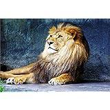 Startonight Cuadro sobre Lienzo Rey Leon, Impresion en Calidad Fotografica Enmarcado y Listo Para Colgar Diseño Moderno Decoración Formato Grande 60 x 90 CM