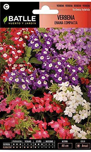 Semillas de Flores - Verbena enana compacta - Batlle