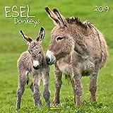 Esel 2019: Broschürenkalender mit Ferienterminen und Bildern von süßen Eseln. 30 x 30 cm