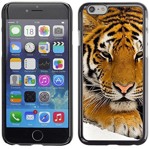 Graphic4You Baby Tiger Tier Design Harte Hülle Case Tasche Schutzhülle für Apple iPhone 6 Plus / 6S Plus Design #2