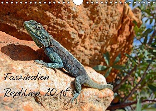 Faszination Reptilien 2018 (Wandkalender 2018 DIN A4 quer): Brillante Reptilienfotos aus Natur und Terrarien bringen dem Betrachter die