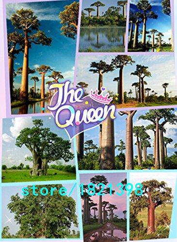 100 graines de feuillus Graines d'arbres de graines de baobab Pour Maison & Jardin