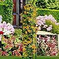 Geißblatt Mischung (zweifarbig/rot/gold) - 3 sträucher von Meingartenshop auf Du und dein Garten